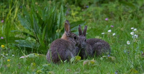 I wish Cookie & Cream has been as sweet as real bunnies. (Image by Flickr user  Porsupah Ree)