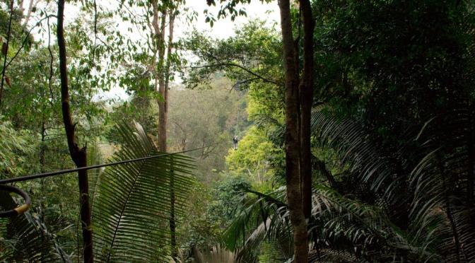Resonance: The Dark Jungle